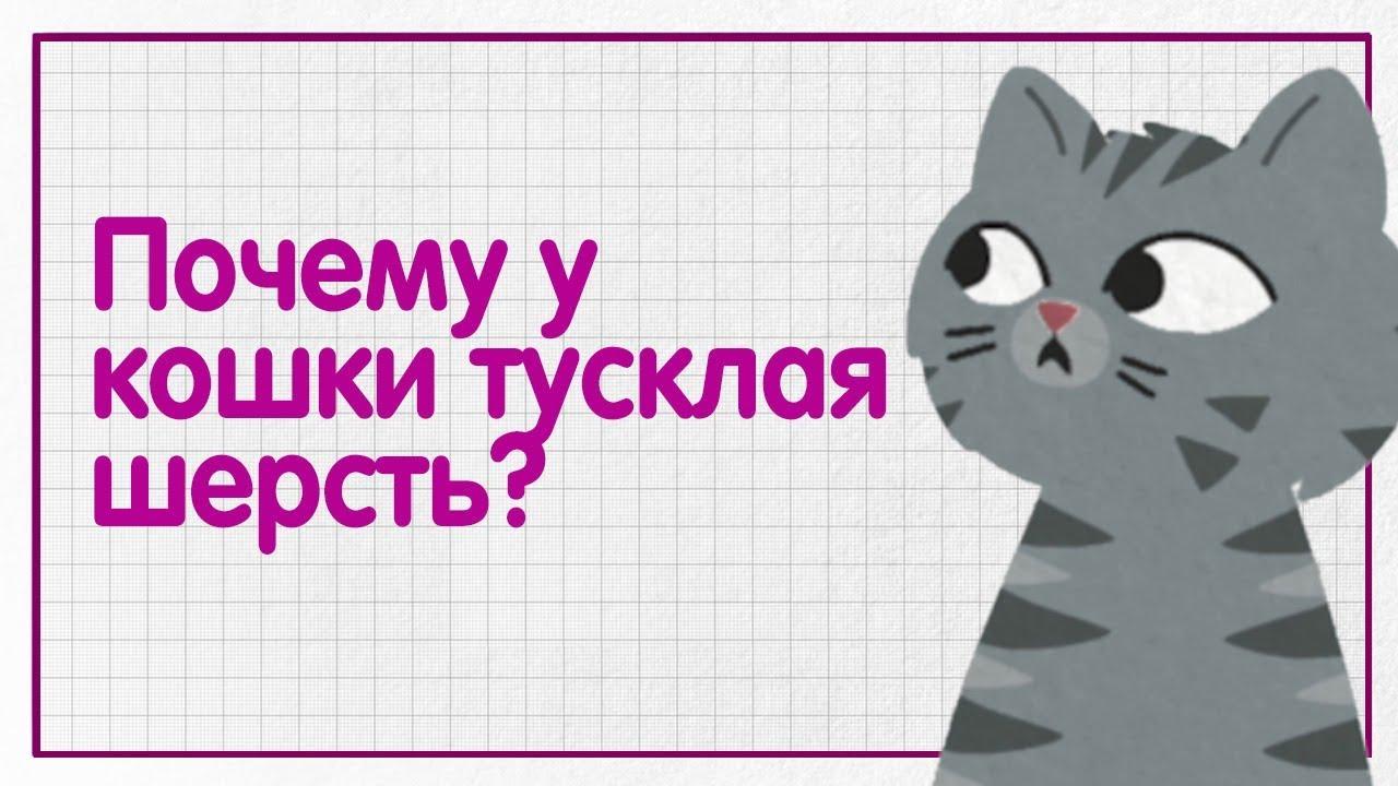 Почему у кошки тусклая шерсть и перхоть? — WHISKAS® К.Т.У.