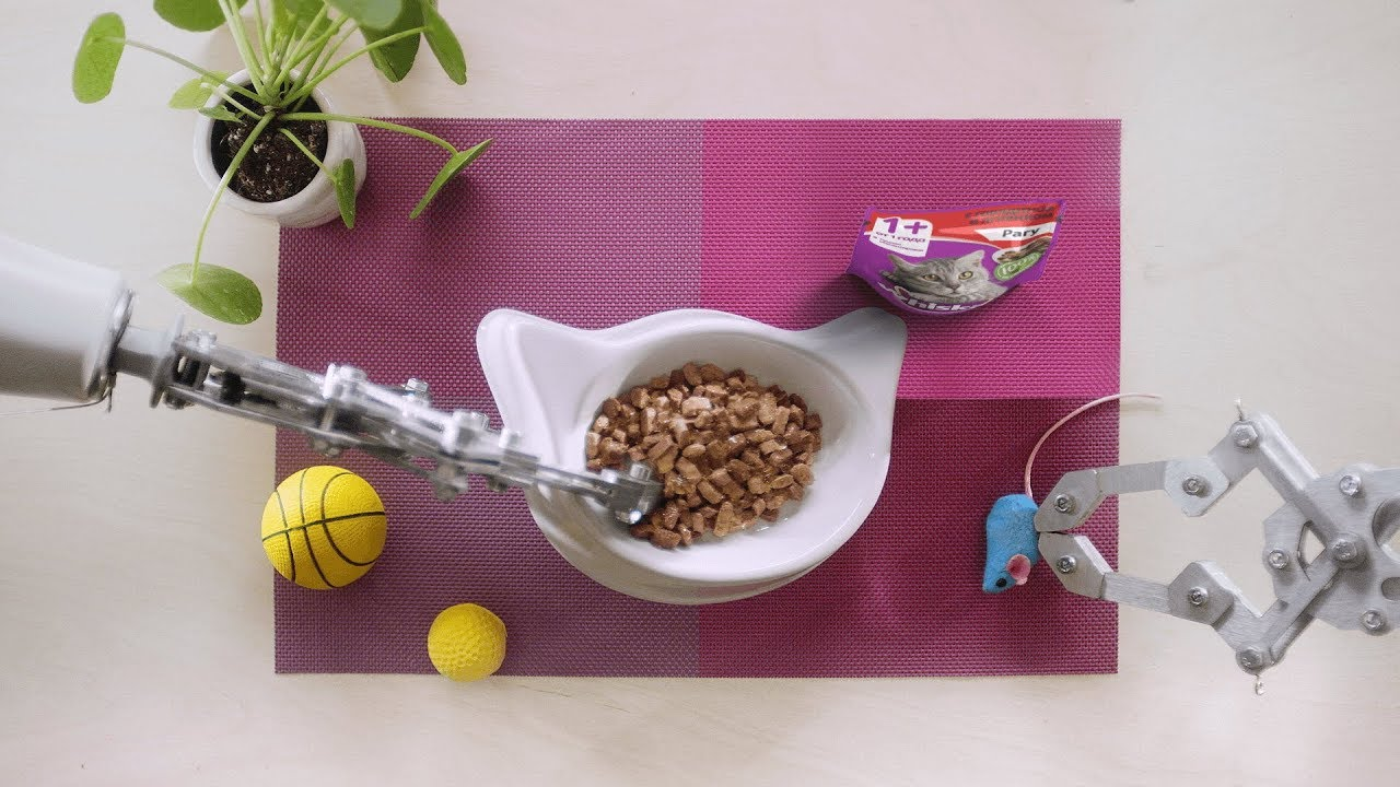 Идеальное меню: искусство правильного питания — WHISKAS® К.Т.У.