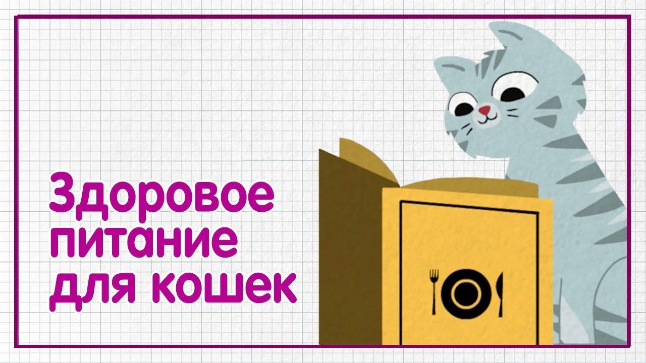 Здоровое питание для кошек — WHISKAS® К.Т.У.