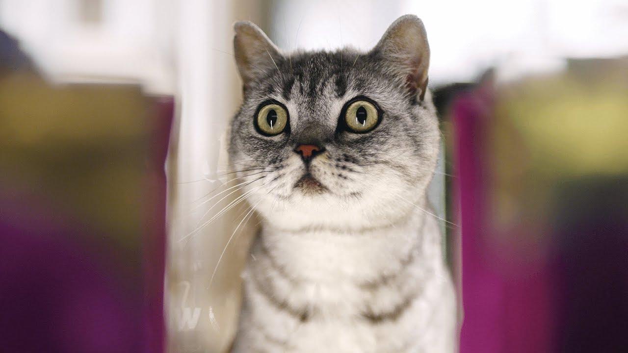 Всегда в расцвете сил: инструкция для кошек в возрасте — WHISKAS® К.Т.У.