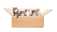 ทำอย่างไรเมื่ออยากรับลูกแมวมาเลี้ยง