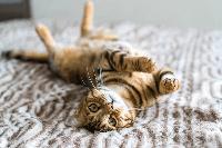 การทำให้ลูกแมวคุ้นเคยกับบ้านใหม่