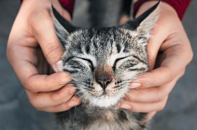 การเล่นกับแมวสูงอายุ