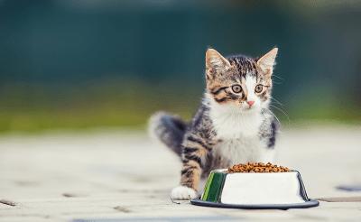 อาหารของลูกแมว