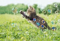 นิสัยรักอิสระของลูกแมว
