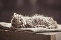การนอนหลับของน้องเหมียว