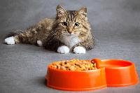การเปลี่ยนมาให้อาหารสำหรับแมวโต