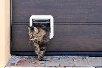 การใช้ประตูแมว