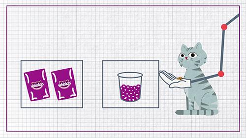 Kediler için sağlıklı beslenme nasıl olmalı?