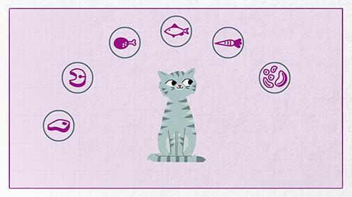 Whiskas kedi mamasının içinde neler var ve nasıl yapılıyor?