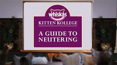 kitten neutering guide information for kitten owners kitten kollege video