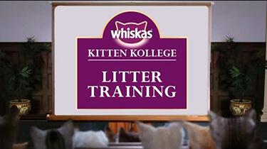 Litter training for kittens kitten kollege video