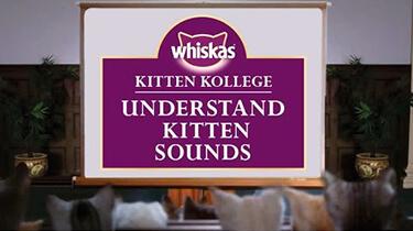 kitten sounds cat talking meaning of cat sounds kitten kollege video