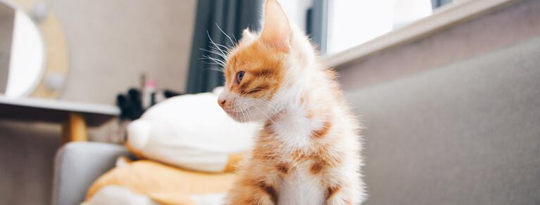 Bringing A Kitten Home
