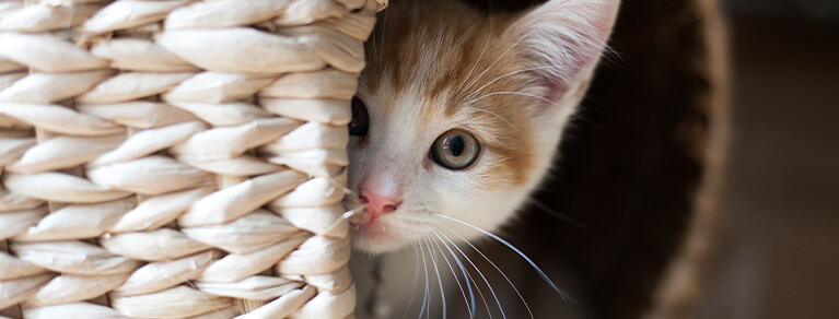 Kitten-proofing your home