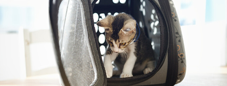 Using A Cat Carrier